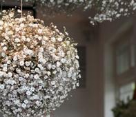 mini-fleurs