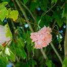 Un baptême «rose» pastel